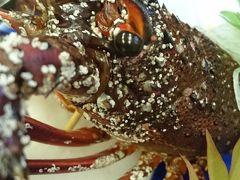 伊勢海老を食べにいすみ市の「伝九郎」さんへ  :*:・゜'★.。・:*:・゜'☆♪