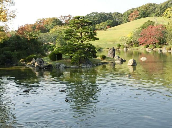 秋晴れの昼下がりから夕方にかけて、大阪万博記念公園・日本庭園を散歩してきました。<br /><br />晩秋の庭園内は、若者よりもシニアのカップルやシニアの団体さんの姿が目立ちました。<br /><br />紅葉もところどころ始まっていましたが、もみじの紅葉はこれからが本番という状況でした。<br /><br />1週間もすれば、庭園内の状況は随分変わってくると思います。<br />