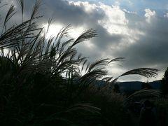 箱根 仙石原 すすきの季節