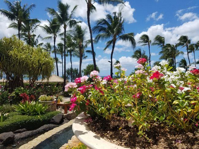 1年ぶり8回目のハワイへ行って来ました。<br /><br />内容は去年と同じで前半は会社のコンベンション♪<br />後半はオアフ島の西海岸コオリナ地区にある、マリオットコオリナビーチクラブ。<br /><br />11日目は帰国日。夕方の便なのでゆっくりです。<br />荷物のパッキングが終わると敷地内を夫婦でゆっくりと散歩しました。<br /><br /><br />