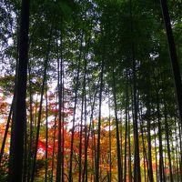 嵯峨野の夕べ、そして朝は竹林から嵐山へ(ガイジンさんラッシュアワー)