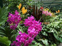 ラン、ラン、ラン!世界遺産のボタニック・ガーデン ジャカルタ・シンガポール2016の旅5-2