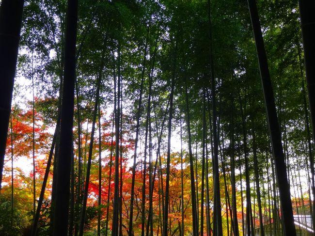 修学院離宮の見学を無事終えた我々は愛車を駆って今日のお宿へと向かいます。<br /><br />しかし、「観光シーズンの京都は車で行くな」の現代の言い伝え(笑)どおり京都の街は混雑しているうえに、泊まるホテルは嵯峨嵐山という観光地のど真ん中。<br /><br />おまけに夕暮れも近づいてホテルに到着するのも一苦労でした。<br /><br />しかし、その甲斐あって心地よいホテルにおいしい夕食。<br /><br />翌日の嵯峨、嵐山の見学もスムースにすることができました!<br /><br />そこでは改めてガイジンさんに人気のスポットだと実感しましたーーー。<br />