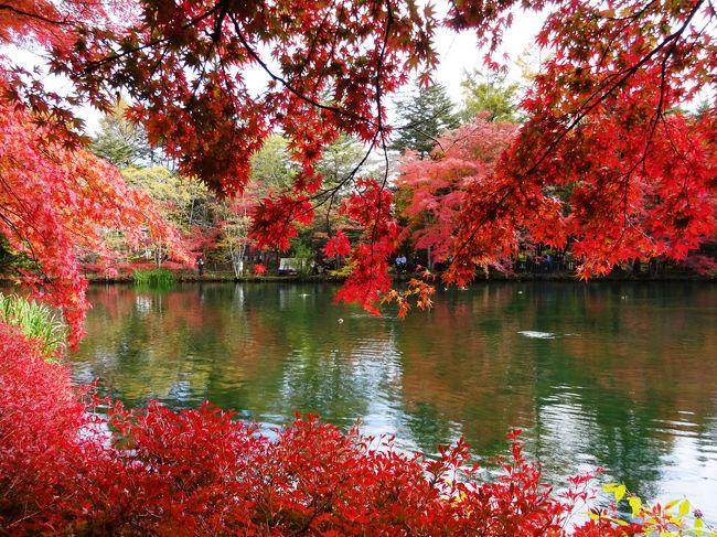 今年の秋は雨ばかりで紅葉も見てないよ、ということで軽井沢に行ってきました。<br />お友達にすすめられた中軽井沢のハルニレテラスに行くのも楽しみです!<br /><br />宿泊は東急のホテルハーヴェスト旧軽井沢です。