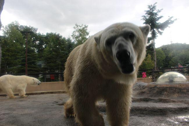 初めての北海道へ。<br />旭山動物園、美瑛、札幌を満喫してきました。<br /><br />初日は旭山動物園へ。