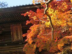 京都('16 紅葉狩り)