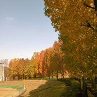 近くの紅葉と里山カフェ