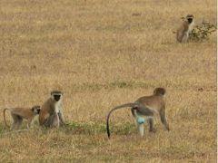 二度目のサファリは憧れのタンザニアへ6最終回です