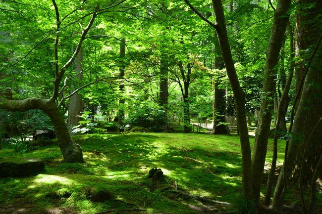 円通院は宮城県松島にあり、瑞巌寺に隣接した臨済宗妙心寺派の寺院です。<br />美しい庭園と紅葉時期にはライトアップイベントが開催され、多くの人で賑わう。