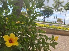 2016ハワイ旅行 2.  到着〜アラモアナでアサイーボール