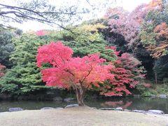 晩秋の大阪万博記念公園・自然文化園の紅葉便り。(2016)