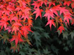 Japan 古里から奥多摩へ  ~ミツバチばあやの冒険~