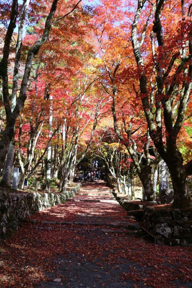鶏山寺と永源寺の見事な紅葉めぐり