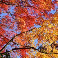 紅葉のススメ!秋の箱根へ家族7人旅行