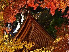 2016紅葉(4) 源朝長の菩提寺・円興寺