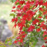 琵琶湖畔で紅葉と芸術と食欲の秋満喫 ①