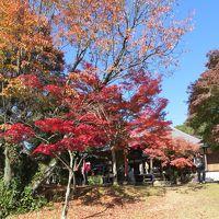 犬山の紅葉