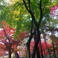 武蔵野散歩・行く秋をあじわう