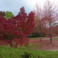 大阪南部をブラブラ・・・ 紅葉を探しに♪