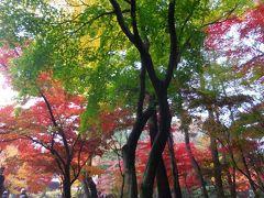 武蔵野散歩・ゆく秋をあじわう