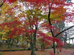 晩秋の優雅な伊豆と富士五湖 愛犬セレブの旅♪ Vol13(第3日目) ☆山中湖:「旭日丘湖畔緑地公園」 美しいモミジの紅葉を愛でる♪