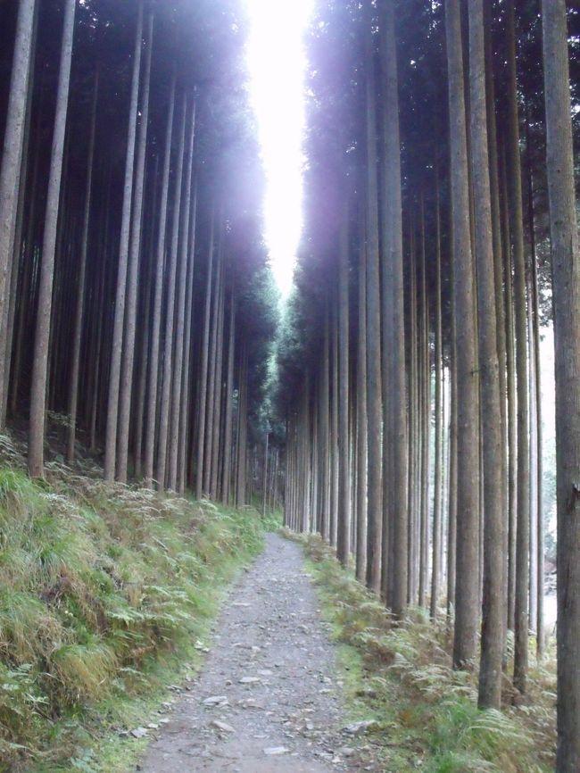 昨年(2015年)秋、京都トレイル東山コースを銀閣寺まで歩いた。今年の秋は、北山から嵐山まで歩くことにした。銀閣寺横の白川の交差点近くにトレイルがある。10月22日歩き始めてすぐ道を間違え、比叡山をめざすも荒れた山道に! 蛇にはかま首を持ち上げられる。夕方、あきらめて修学院へ降りてくる途中で猪(または熊)に遭遇。散々な1日だった。<br /><br />10月30日<br />再び再出発、先日のミスコースはほとんど最初からだった。京は大原までは」と考えたのであるが、遅い歩きで日没に! おおぎ峠を越えて京都トレイルと東海自然道の分岐点で5時15分、日は暮れたけれどまだ明かりはある。どちらか迷う。左、京都トレイルにこだわったのは大失敗で、真暗の中で滑落、沢に落ちそうになる。運よく、木の根につかまり、火事場のばか力からで這い上がった。山は怖い。<br />11月12日<br />天気もやる気も回復、大原から再スタート。鞍馬から夜泣峠、小峠の荒れた登山道でくせんするも京見峠へ。5年前、嵐山から二の瀬まで歩いた道、記憶にはあまり残っていないを逆に歩く。どうやら日没までに、氷室の里に<br /><br />11月18日<br />千本―北大路に、再び京都トレイルを歩く。京見峠までは単調な車道ののぼりであるが、紅葉の進捗が楽しめた。トレイルを抜けて沢の池、ここの水の色、紅葉の山々と合わせて気分は最高。さらに高尾へ<br />ところが紅葉はいまいちで、…<br />高尾ー清滝間は、京都で一番のハイキングコースで、観光客も歩く。まだ日没まで時間はあったが、清滝から京都バスに乗車。京都トレイル、西山への最後のアクセスは次回になってしまった。<br /><br /><br />