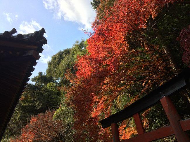 光に透けた紅葉が美しい。<br /><br />JR山崎駅から小倉神社経由で天王山の山頂へ。<br />少し下り、7合目にある青木葉谷展望台にて<br />本日の山Cafe♪<br /><br />ナメてかかっていた…<br />小倉神社から天王山の山頂までは<br />かなり山登った感あり◎<br /><br />歴史好きにはたまらない場所だろう。