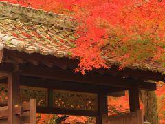紅葉の広島、山口の旅♪ 厳島神社から錦帯橋、再び広島縮景園♪