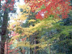 東郷公園紅葉散歩