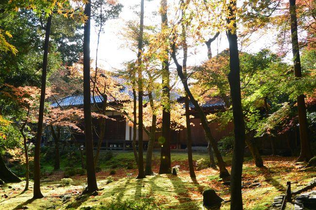 以前から行きたかった『苔寺』こと『西芳寺』。<br />苔と紅葉のコントラスが見たいと秋に行こうとずっと決めていました(^-^)<br /><br />そして2ヶ月前にハガキを出し、念願の『苔寺』へ☆<br /><br />そしてその時期に楽しみたかった翠嵐ラグジュアリーホテルにある<br />カフェ「茶寮 八翠」でのアフタヌーンティー☆*:.。. o(≧▽≦)o .。.:*☆<br />保津川を眺めながら贅沢なシチュエーションで楽しめるとあって<br />とっても楽しみにしていました♪<br /><br />とりあえずこの2つのミッションから、<br />近くにある『鈴虫寺』、『地蔵院』にも立ち寄り、<br />そして『大覚寺』でライトアップも楽しんで<br />内容の濃い日帰り京都旅となりました♪( ´▽`)<br /><br />今回の相棒は会社の同僚のKさん( ^ω^ )<br />以前に御朱印を集めていて、私が集める話をしたら、<br />また集めだした御朱印仲間です(#^.^#)<br /><br />写真が多くなったのでまずは、前編としてアップします♪<br />