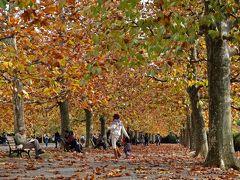 プラタナスの並木が秋色に、新宿御苑・・・