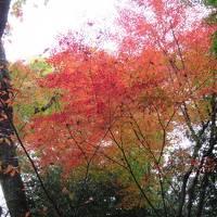 紅葉を楽しんだ2日間(京都)