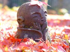 晩秋の京都の紅葉を追いかけてー再びお地蔵さまに会いに圓光寺へ<前編>