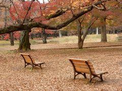 紅葉と黄葉の代々木公園