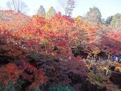 2016京都の秋、若冲と紅葉の休日