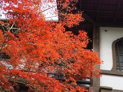 2016紅葉の旅~京都・今年はジャストタイミングで紅葉狩りの巻