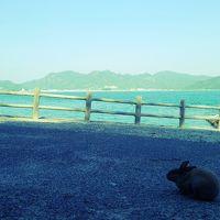 うさぎの島を歩いて1周〜大久野島へ〜