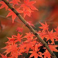 約600本の紅葉が鮮やかな須磨離宮公園