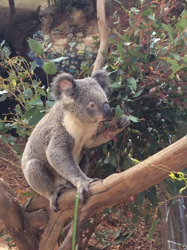 オーストラリア(ウルル→ケアンズ→シドニー)の7泊8日の旅の記録です。