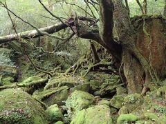 屋久島の森と海