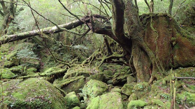 日本蘚苔類(せんたいるい)学会というコケの学会で、屋久島に行ってきました。<br /><br />森と海を楽しんできました。