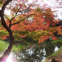 紅葉の京都*嵐山(オルゴール博物館・清凉寺・大覚寺)~亀岡(亀山城址)~舞鶴へ~♪