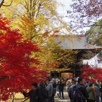 紅葉の九品仏浄真寺は、アド街効果で参拝者がいっぱい!