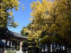 富士宮・久遠寺の黄葉 2016.11.26