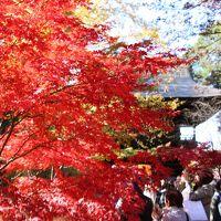 紅葉のフィナーレは九品仏浄真寺〜等々力渓谷