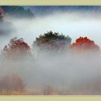 Solitary Journey [雲海特別編]美しく幻想的な雲海と遭遇!雲海の中に紅葉樹が頭をのぞかせていました。<八幡高原千町原>広島県北広島町