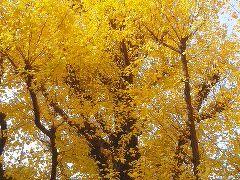 都内と千葉の紅葉とイルミネーション