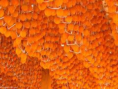 秋の風物詩・・・あんぽ柿