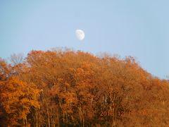 高尾山の紅葉を訪ねて