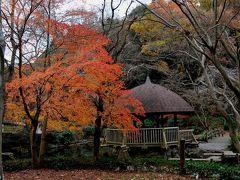 川崎・東京 紅葉巡り 東高根森林公園、かぶと塚ふれあいの樹林、水元公園
